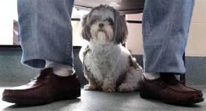 110701-dog at vet's-h.grid-6x2